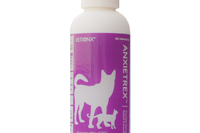 Natural Anxiety Meds For Dogs