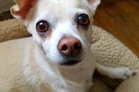 Mimicking the Symptoms of Senior Dog Dementia?