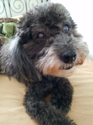 One Dog's Journey Through Senior Dog Dementia