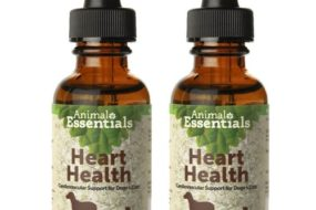 Natural Support for Your Dog's Heart