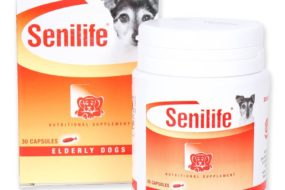 Help For Dogs With Dementia