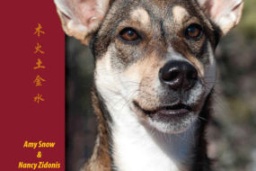 A Guide to Canine Acupressure