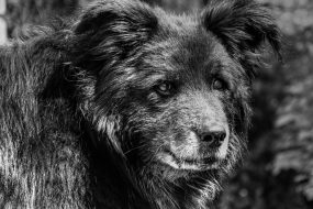 Recognizing Behavioral Changes in Senior Dogs