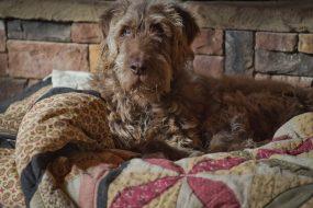 Cognitive Function: Help for Older Dogs