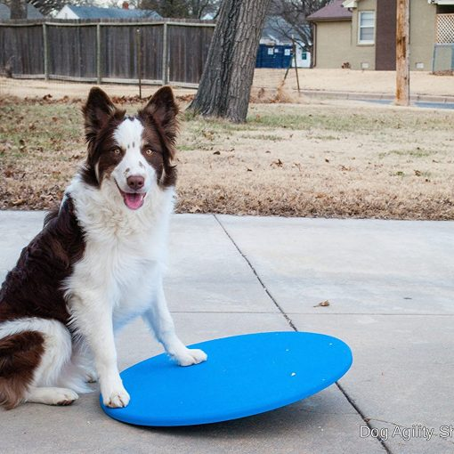 dog wobble board