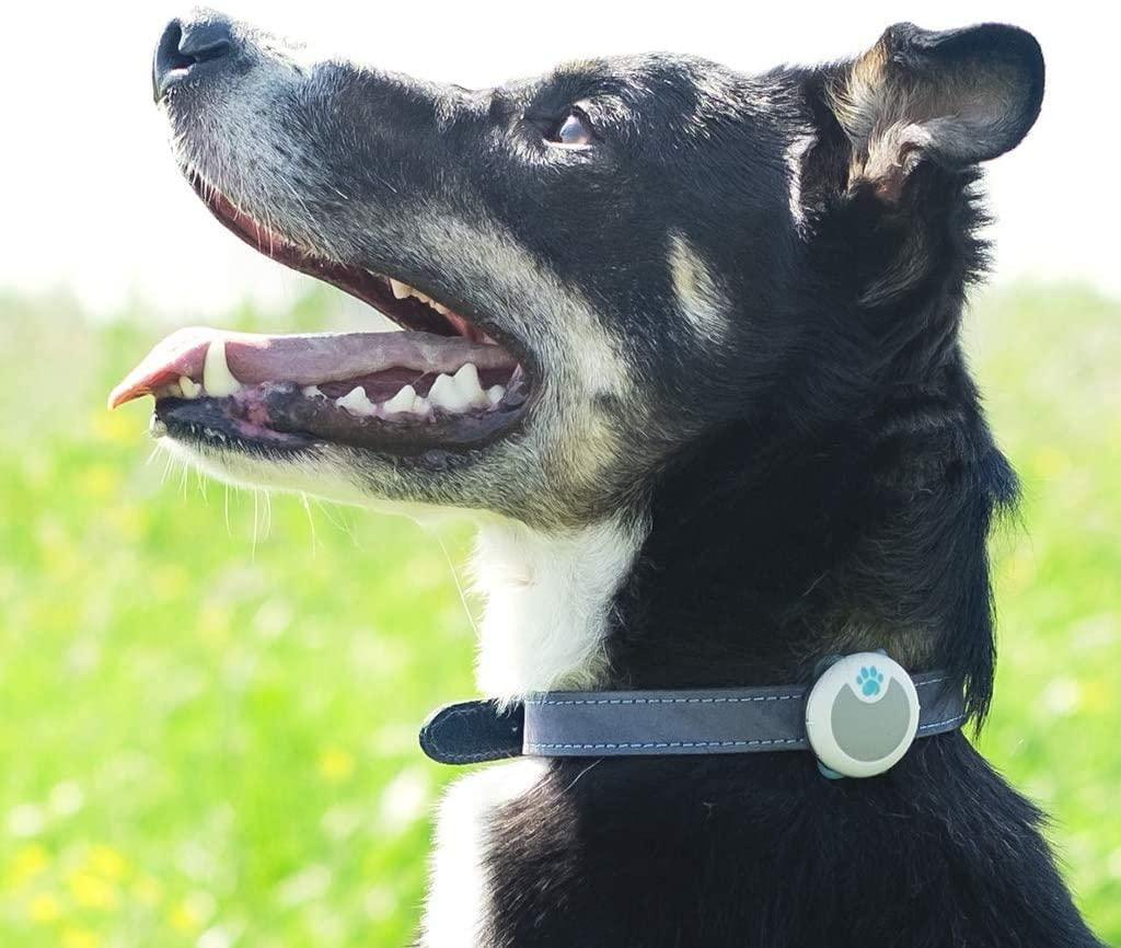 dog activity tracker