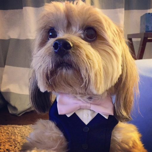 bowtie harness