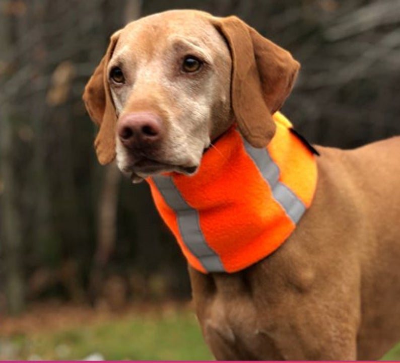 glo pup neck warmer