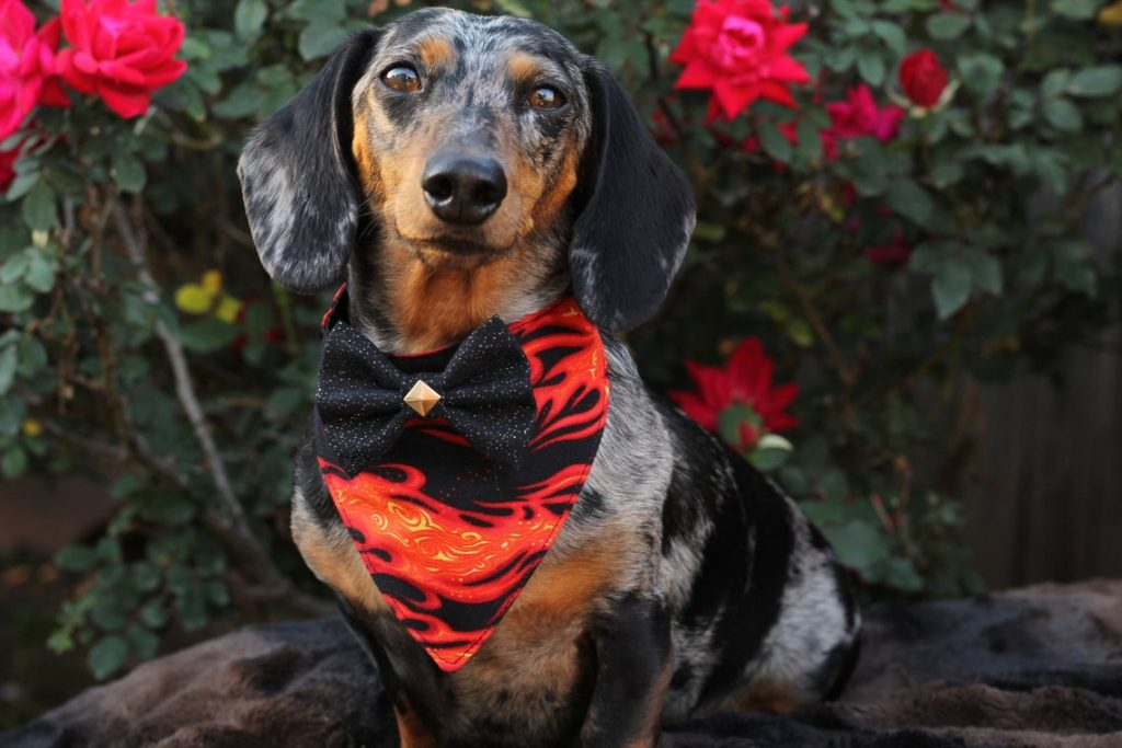 fiery bandana with bowtie