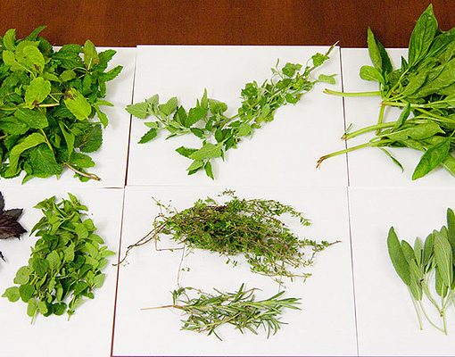 herbs on white paper