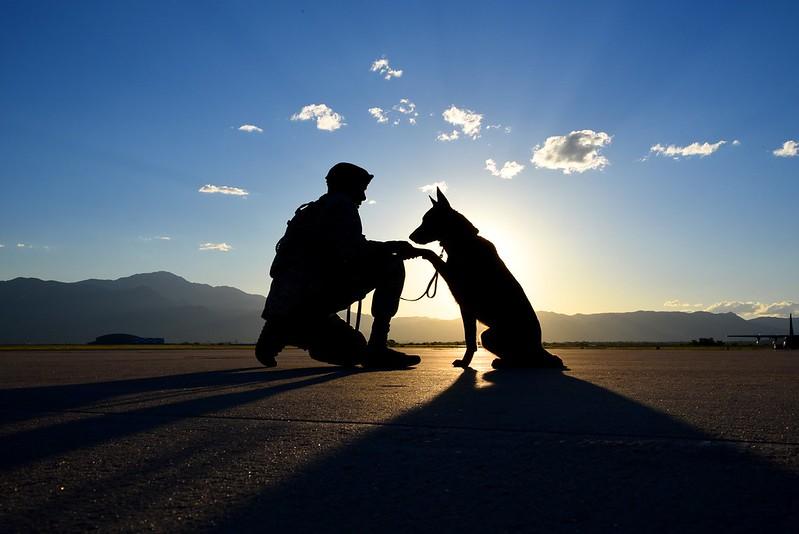 man holding dog's paw