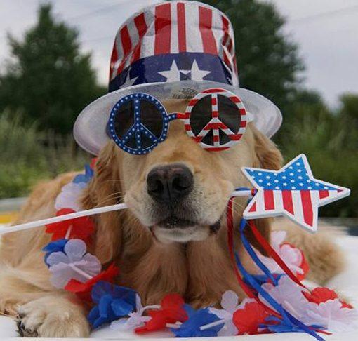 July 4 dog