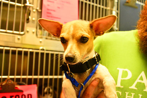adopt from petfinder