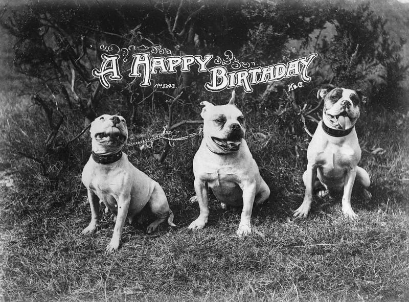 happy birthday 3 dogs