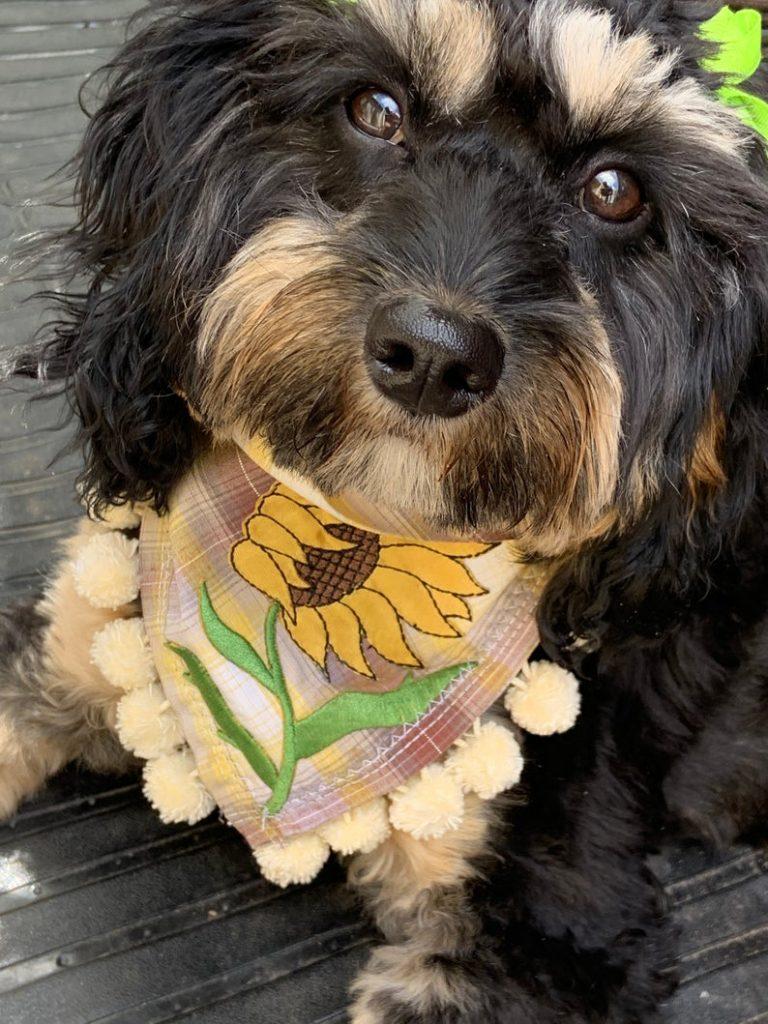 sunflower bandana dog