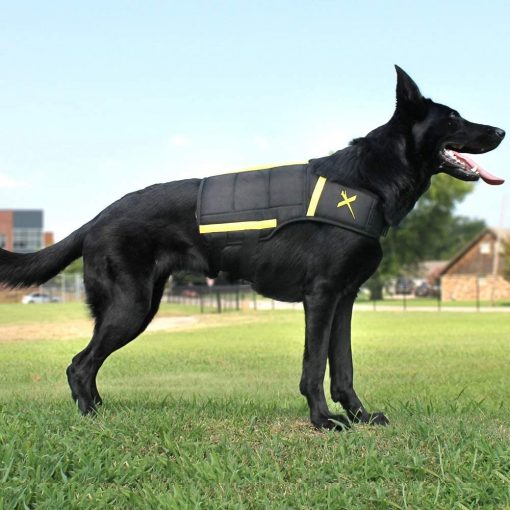 fitness vest for dogs