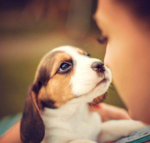 puppy communication